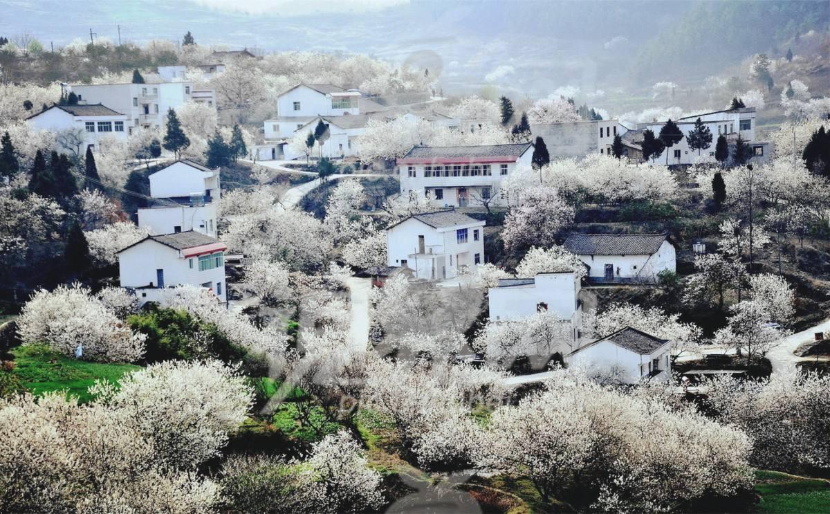 湖北乡村振兴21条举措出炉 到2050年全面建成农业农村现代化强省