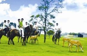 好消息!15万人免费游11个景区 武汉人凭身份证入园免票
