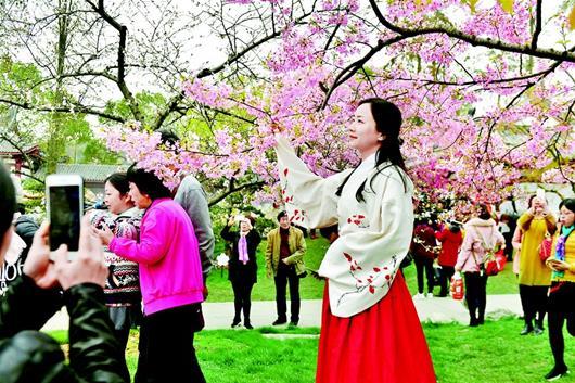 武汉东湖樱花激情怒放 花期将持续到4月中旬(图)