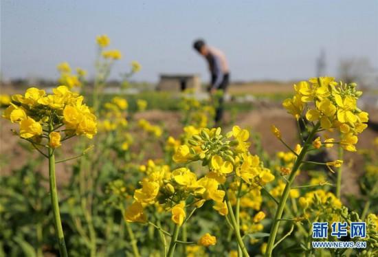 春分时节花伴农事