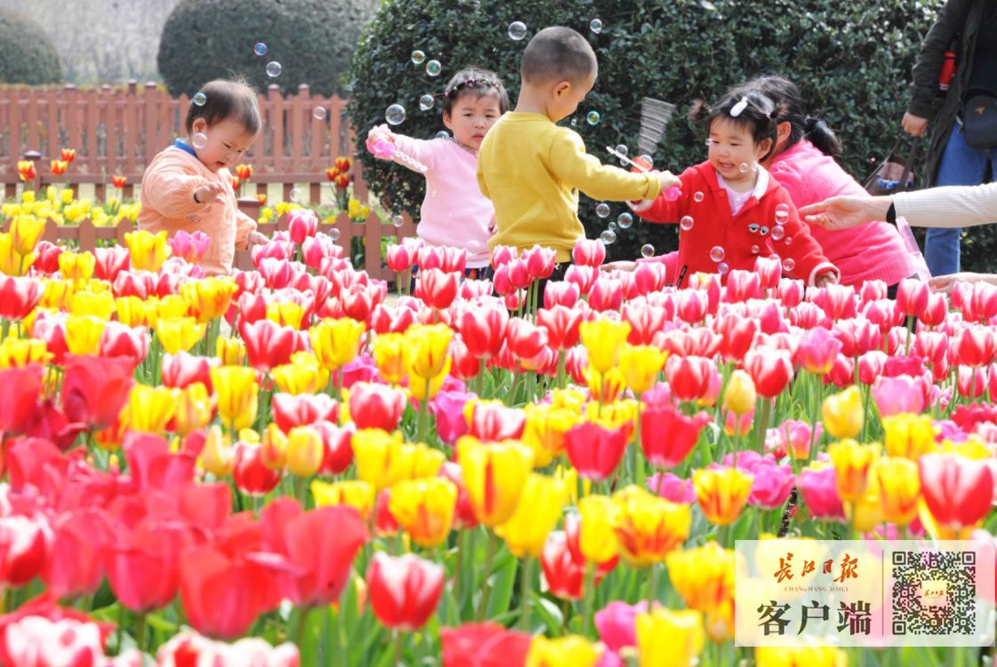 武汉大学的樱花开了 | 图说武汉