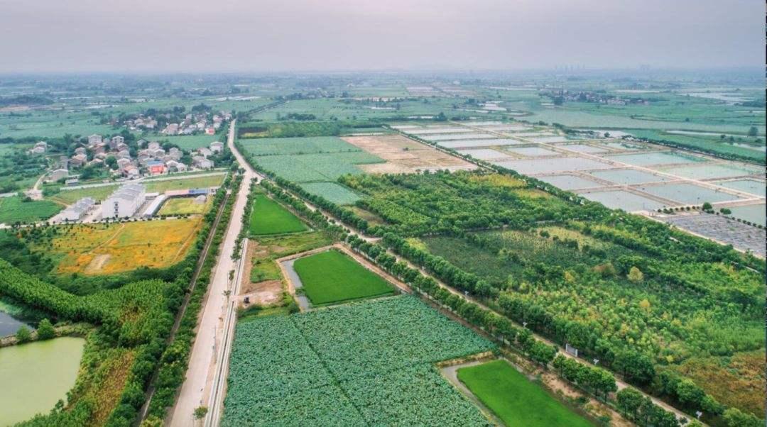 上半年鄂州农业经济形势