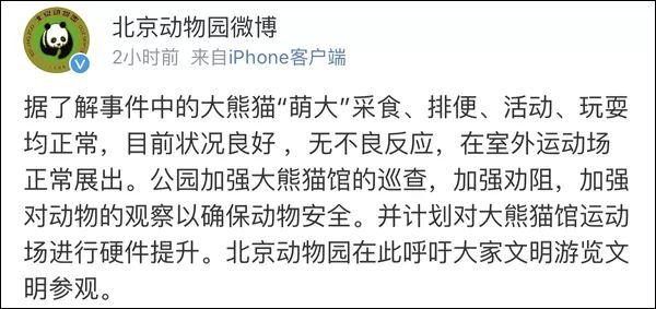 愤怒 游客竟拿石头砸大熊猫 北京动物园回应了