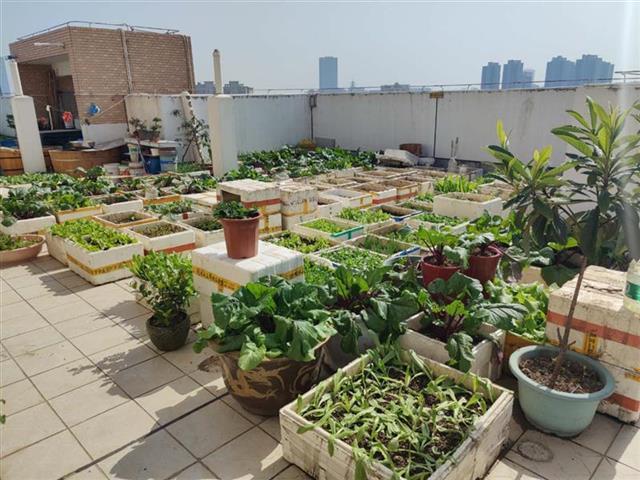 居民楼天台变成菜园子,被子晒在