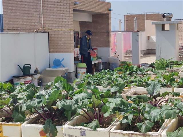 居民楼天台变成菜园子,被子晒在有异味的空气中!城管将督办此事