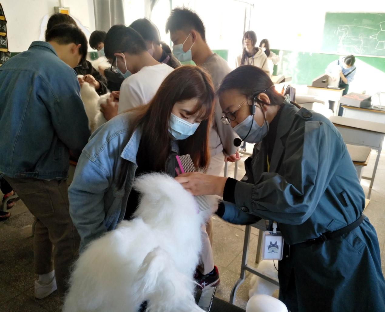 狗狗洗剪吹做得好年入50万,宠物护理与美容课程受热捧