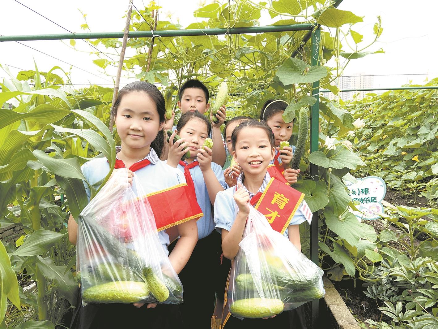 自己种的瓜果蔬菜熟了 孩子们和父母采摘分享喜悦