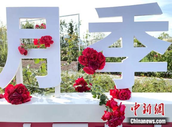 产自中国的樱花咋成了日本国花?快来涨知识!