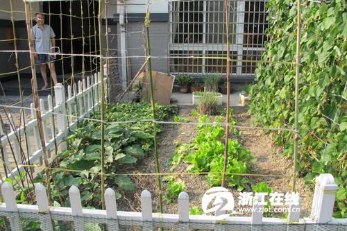 一楼菜园设计实景图