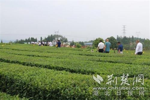 """【大江奔流――来自长江经济带的报道】告别环保""""老三样"""""""