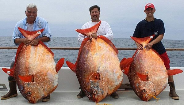 美渔船一天内捕到3条月亮鱼 有渔民一生难遇