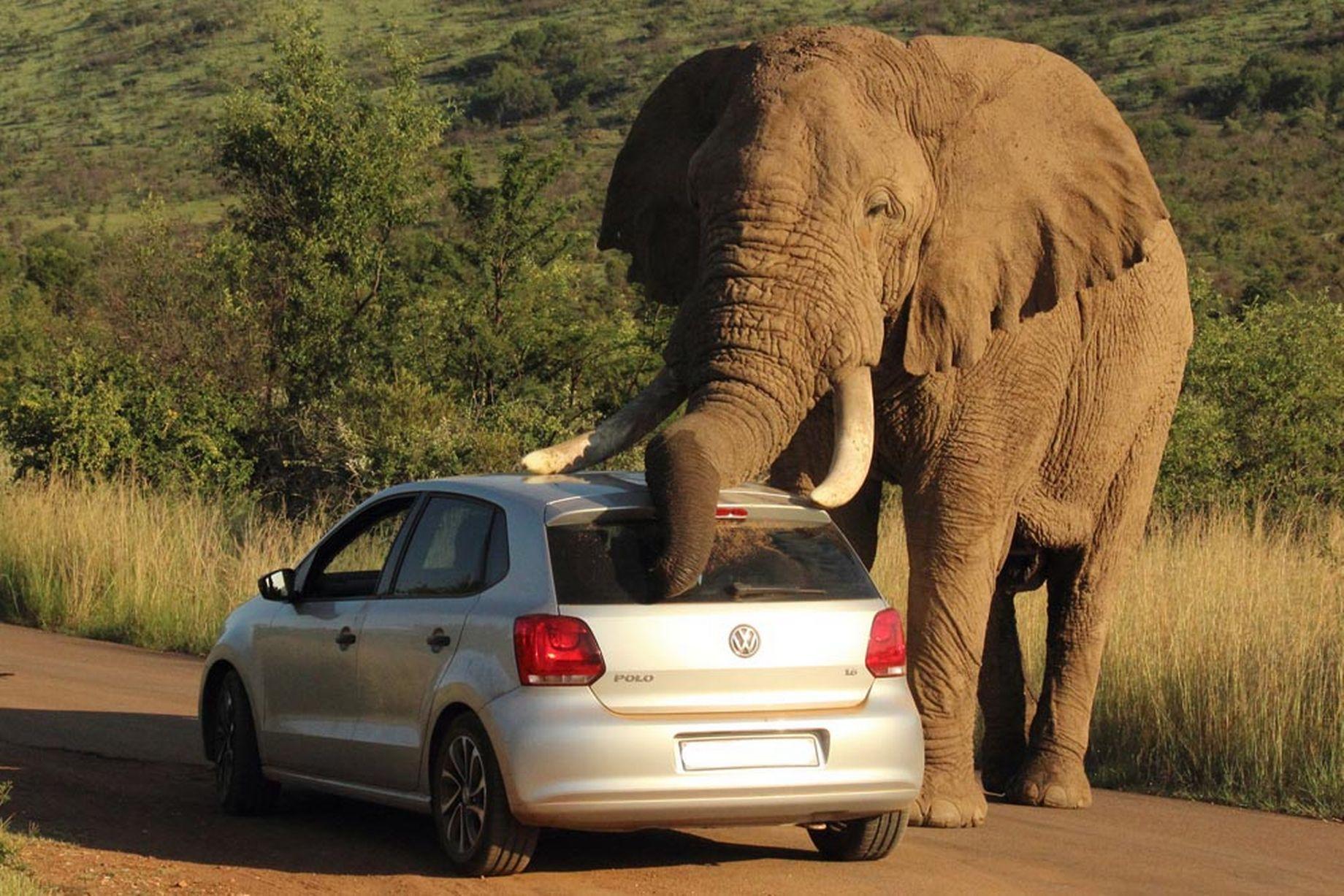 大象 动物 1840_1227