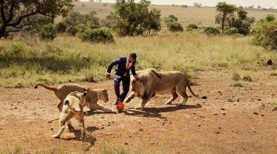非洲管理员与狮子踢足球呼吁保护动物( 一个网络短片展示了被称作狮语者的动物园管理员凯文(Kevin Richardson)与三只狮子上演的一场足球对决。该管理员用20年的时间与令人心生畏惧的狮子、鬣狗们生活在一起,和它们建立友谊。凯文希望人类也能够意识到自己的责任所在,减少由于非法狩猎、非法交易以及对大自然的破坏。 图集详情: 或许我们都很高兴去动物园看猛虎雄狮猎豹等,但是如果让你将这些猛兽样在家里当宠物,恐怕很多人就会吓破胆了。然而真的有这样一些人存在,他们不惧与猛兽亲密接触,甚至和它们成了要好