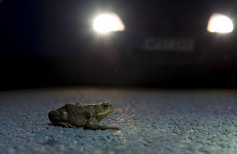 英年度野生动物摄影大赛获奖作品