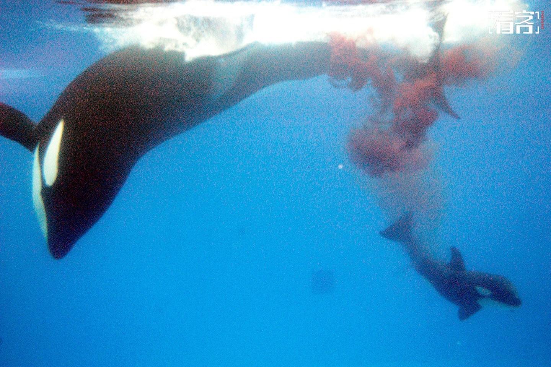 鲸鱼剪纸步骤图解