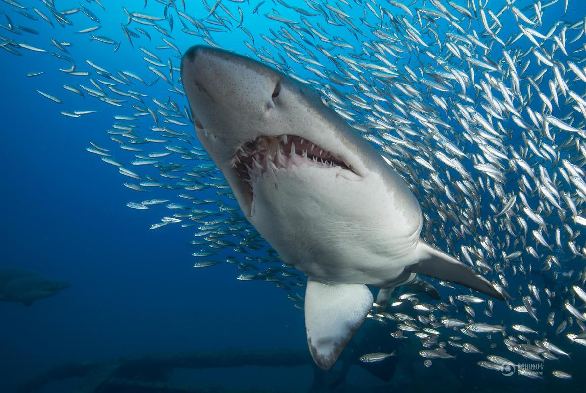 壁纸 动物 海洋动物 鲸鱼 桌面 1193_800