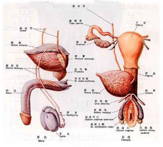 小伙天生女生两套v小伙系统昵称为男人生殖器是外表男女英文好听图片