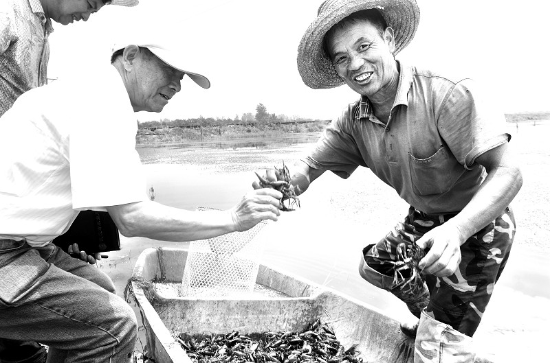 小龙虾养殖面积锐减 养虾业亟待科学规范 -荆楚