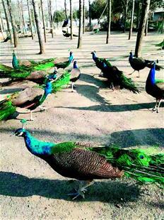 湖北野生动物驯养繁殖业发展调查