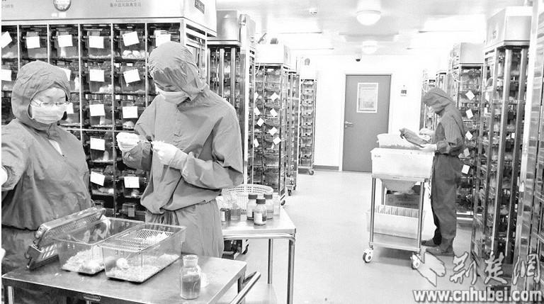 500强医药巨头的外包动物实验项目服务资格与能力