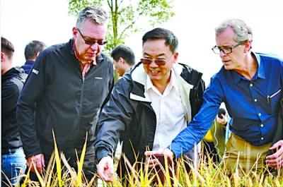 """张启发研究有助于减少化肥农药用量 降低环境污染 """"绿色超级稻""""推广面积达9000万亩"""