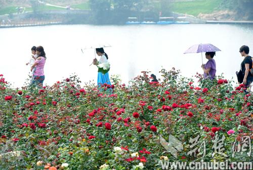 华中最大玫瑰主题园木兰玫瑰花园精彩亮相