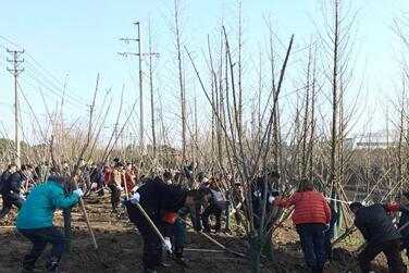 武汉开发区(汉南区)千名干部职工植树播绿倡新风