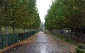 武汉试点新技术减少法桐飞絮 后湖片区将开放多个公园和小游园