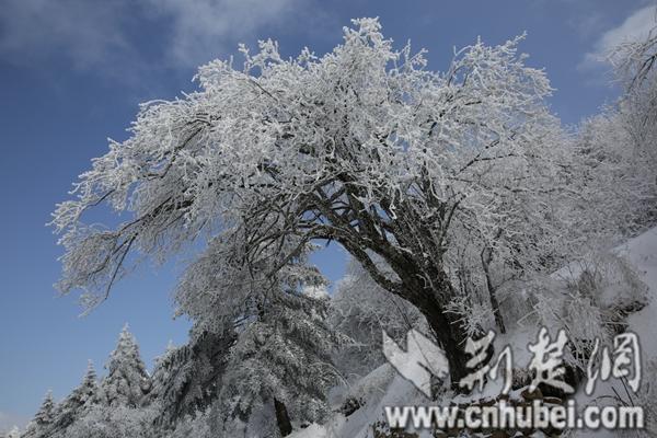 神农架冬景.JPG