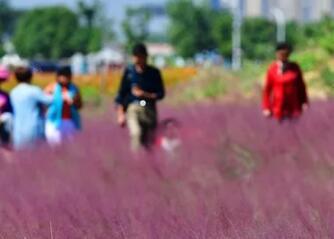 杭州的网红花海全被踩坏了,武汉的还美着呢!
