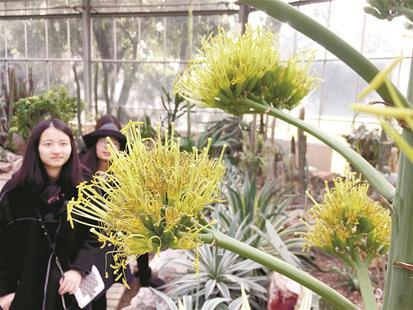 武汉植物园有万余保护物种 700多种珍稀濒危植物园内疗养盼返自然
