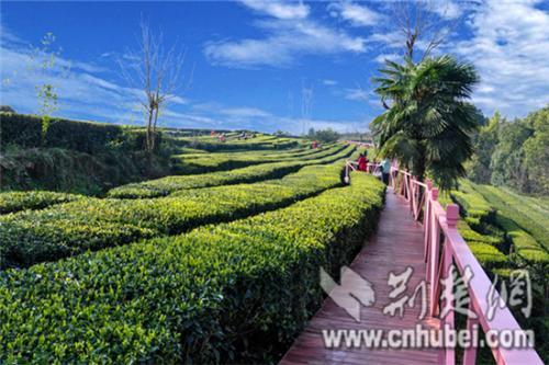 今年1-10月,武汉农产品质量安全检测合格率达到99.9%
