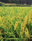 田野上的奇迹——中国农村改革三十年成就辉煌